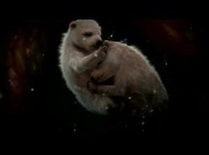 Unborn polar bears